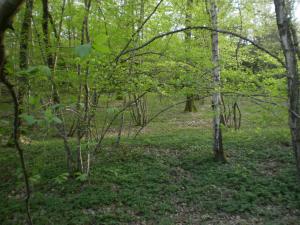 Wald-im-Fr%C3%BChling